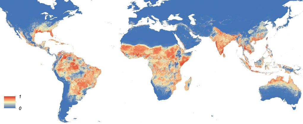 Zika Virüsünün Yaygın Olarak Görüldüğü Ülkeler